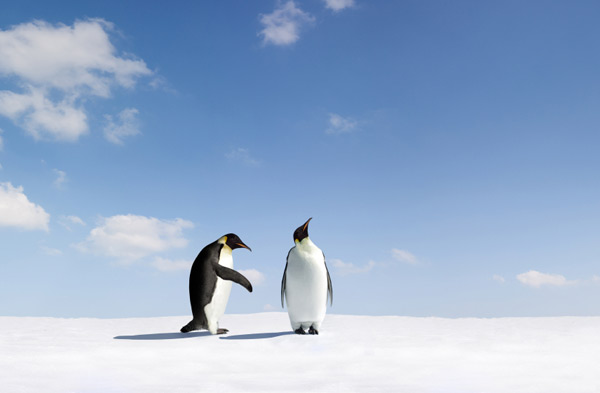 Penguins cold shoulder meaning