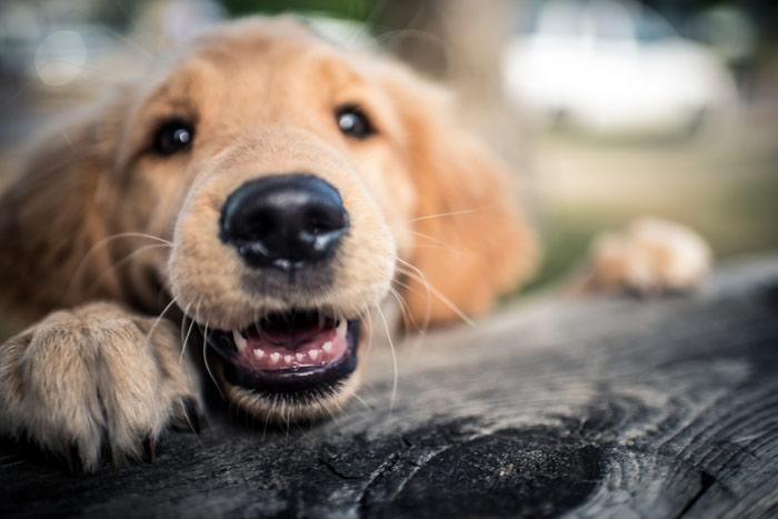 Dog Lips