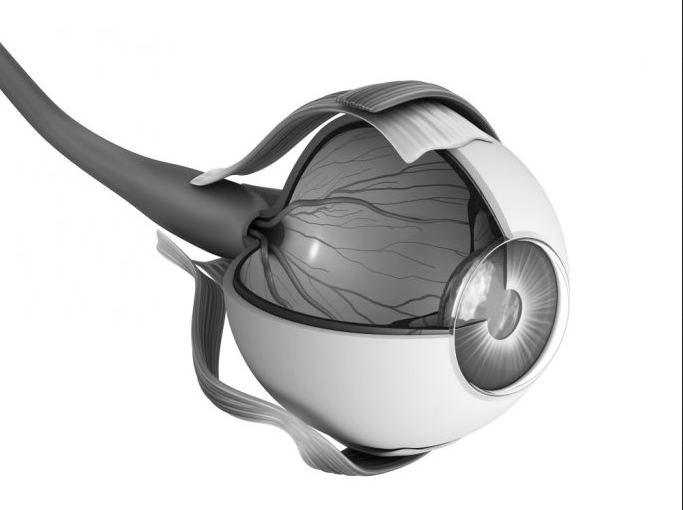 Glaucoma: Early diagnosis and treatment can prevent blindness