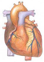 Psoriasis Heart